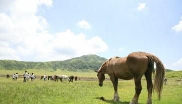 馬プラセンタとは おすすめプラセンタサプリ